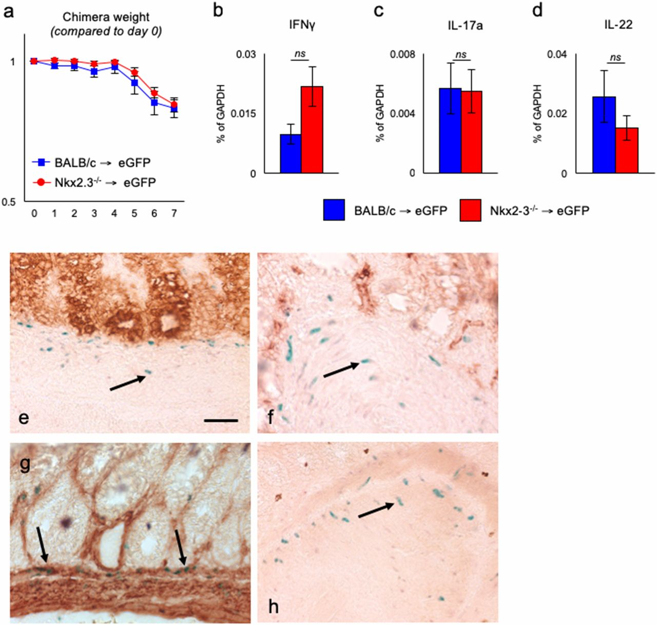IL-22–Independent Protection from Colitis in the Absence of