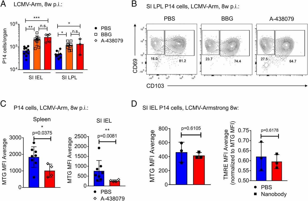 ARTC2 2/P2RX7 Signaling during Cell Isolation Distorts Function and