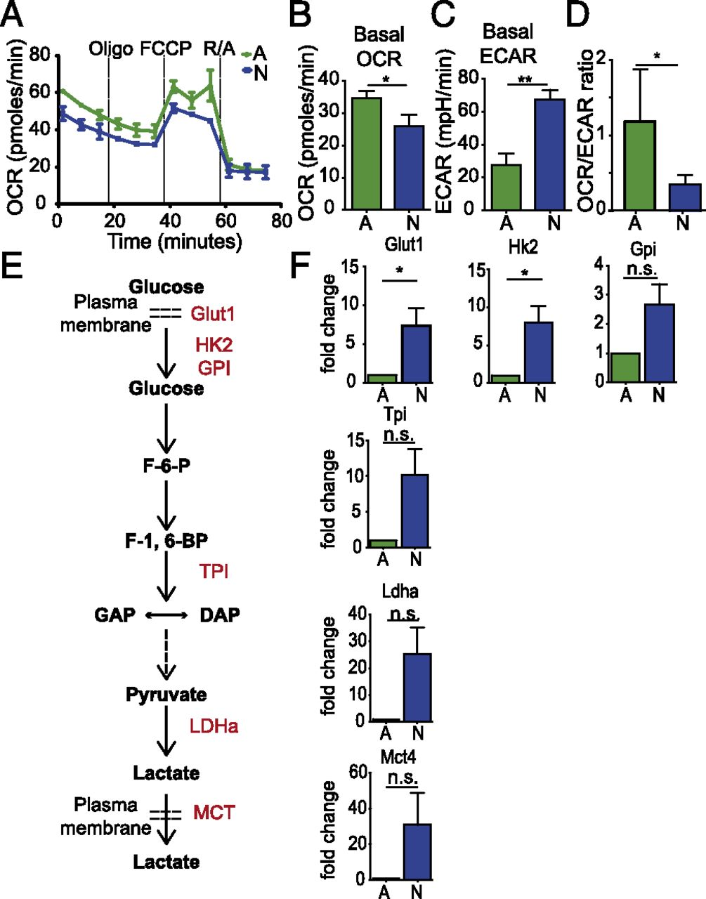 Cutting Edge: Elevated Glycolytic Metabolism Limits the