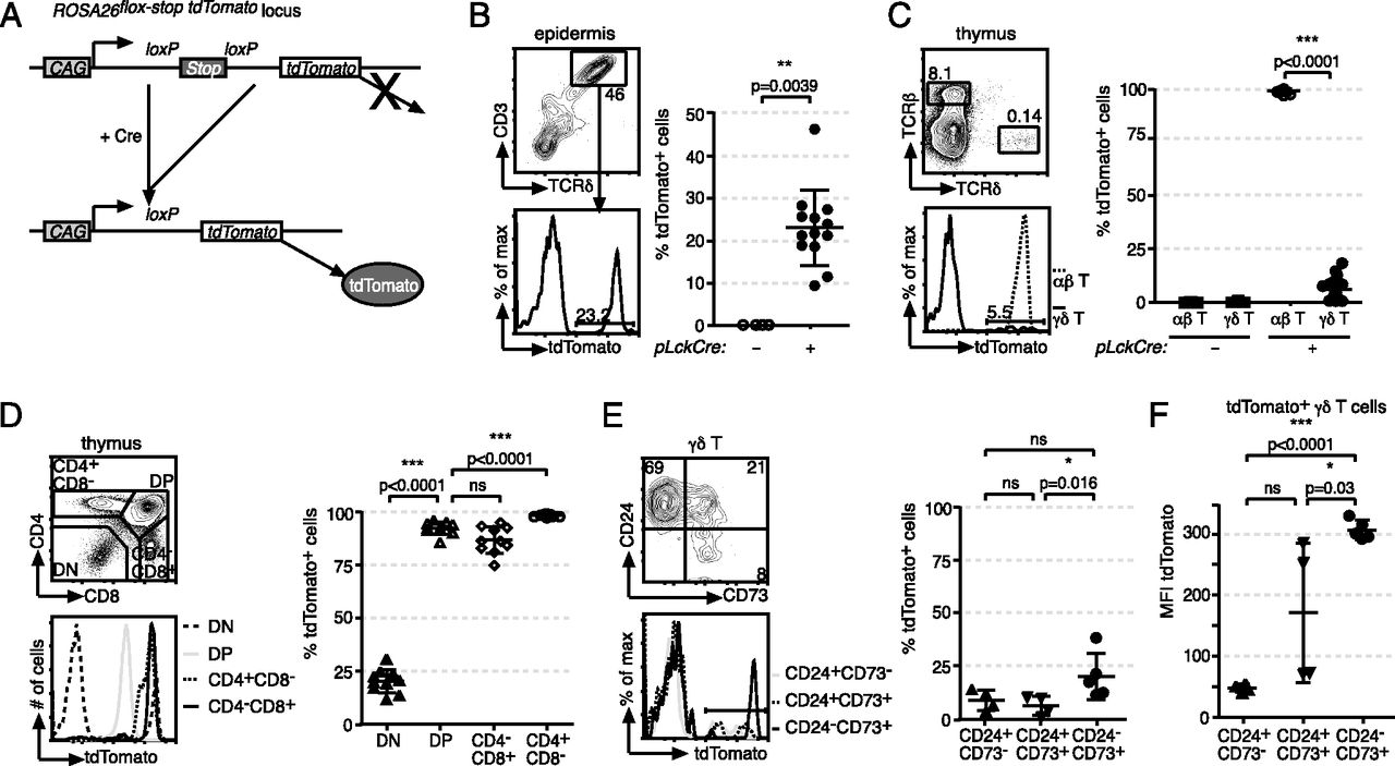 Proximal Lck Promoter–Driven Cre Function Is Limited in Neonatal and