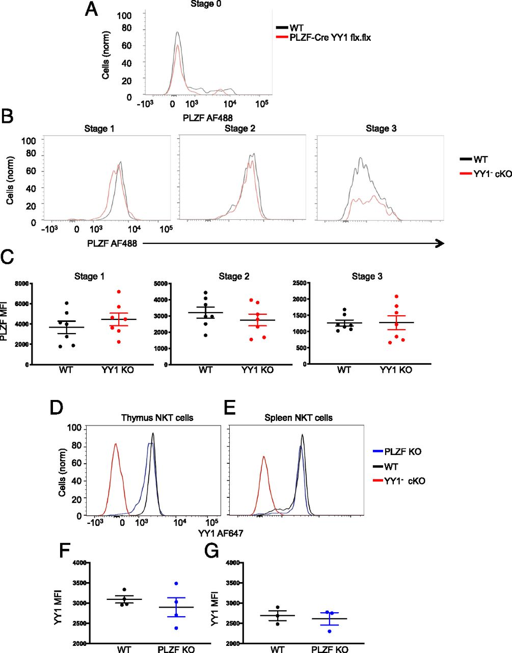 Coexpression of YY1 Is Required to Elaborate the Effector