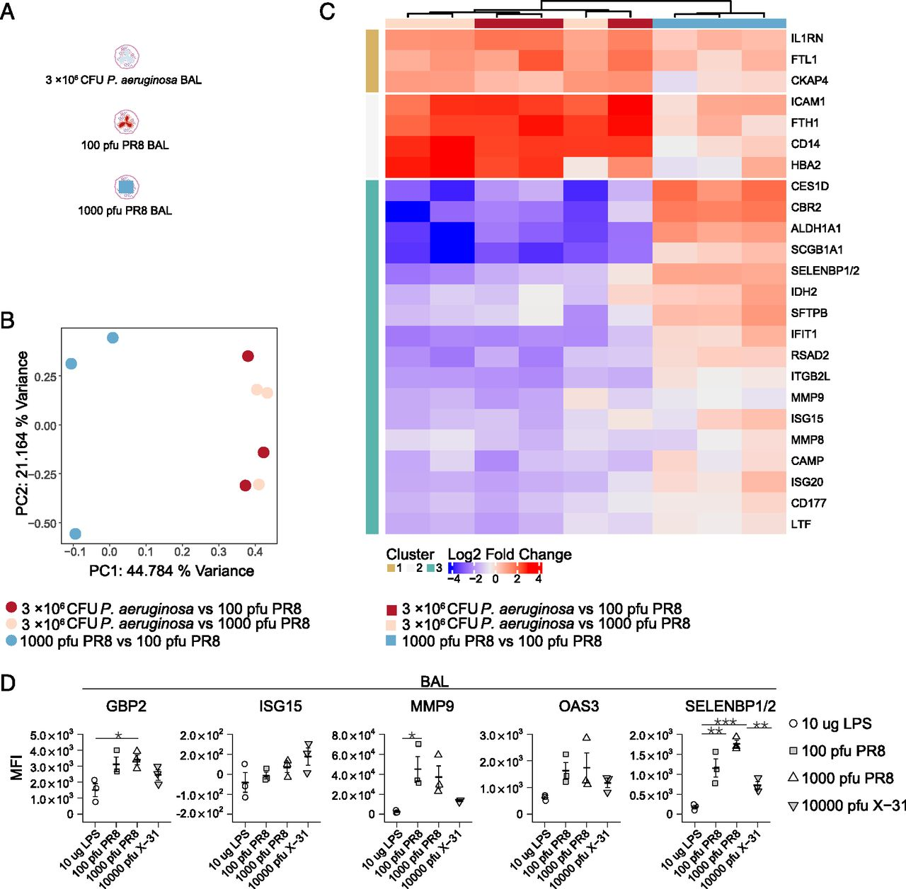 Semiquantitative Proteomics Enables Mapping of Murine