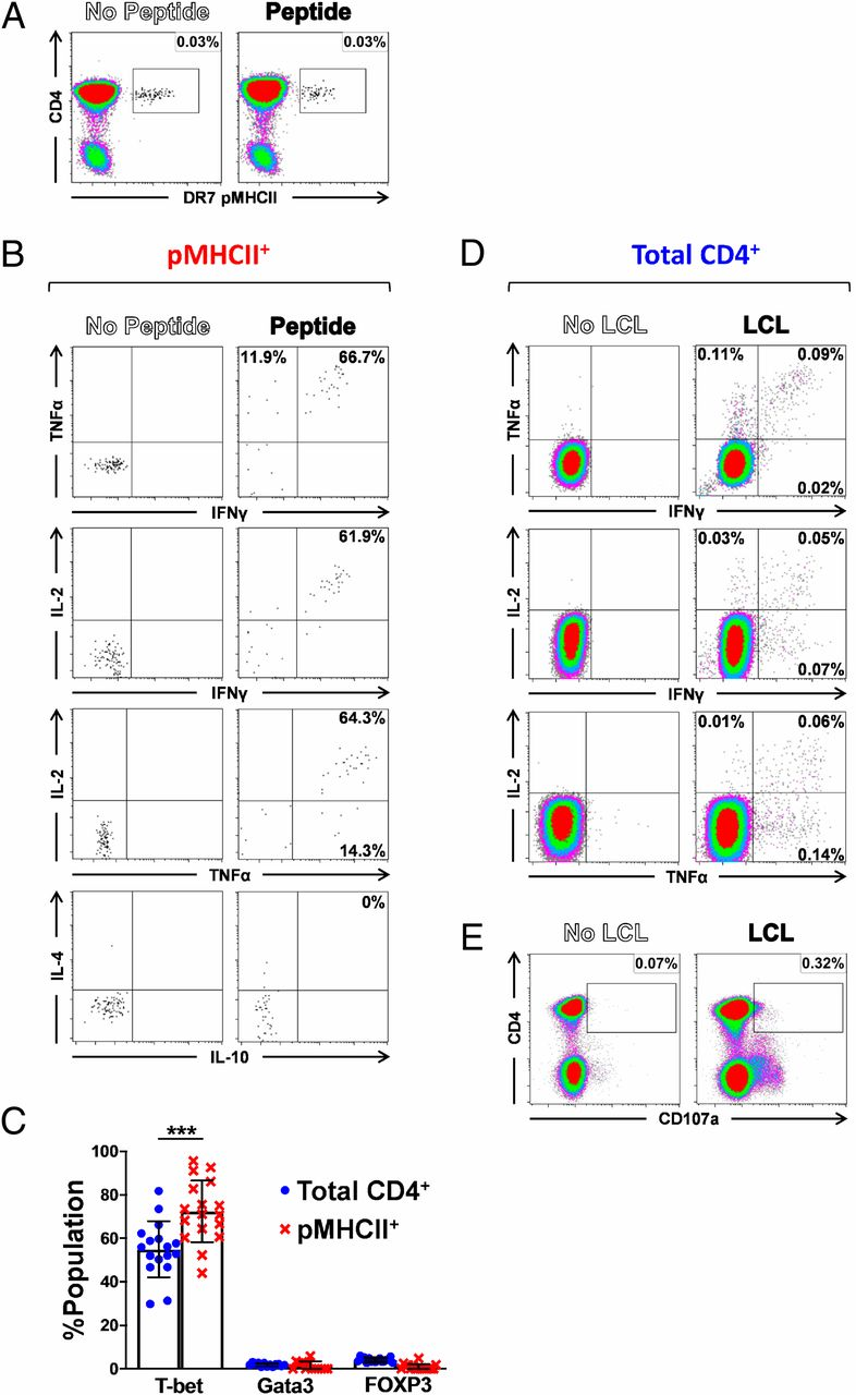 Primary EBV Infection Induces an Acute Wave of Activated